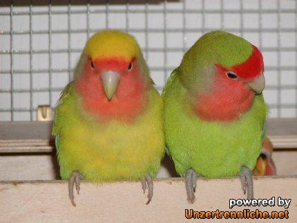 vogellexikon mit bildern